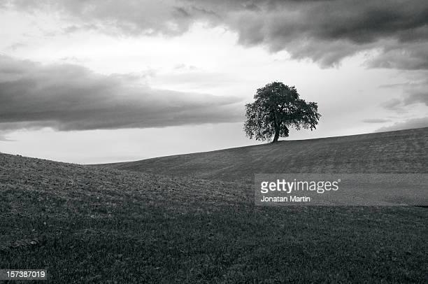 arbol solitario en blanco y negro - blanco y negro ストックフォトと画像