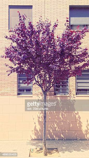 arbor day - fruta stock photos and pictures