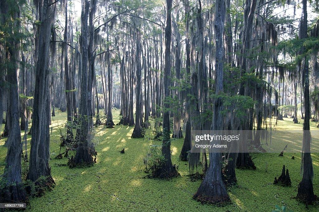Arbor Day : Stock Photo