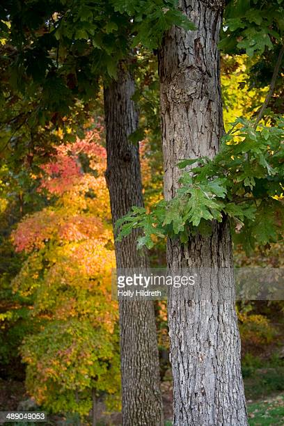 arbor day - lake of the ozarks stock pictures, royalty-free photos & images