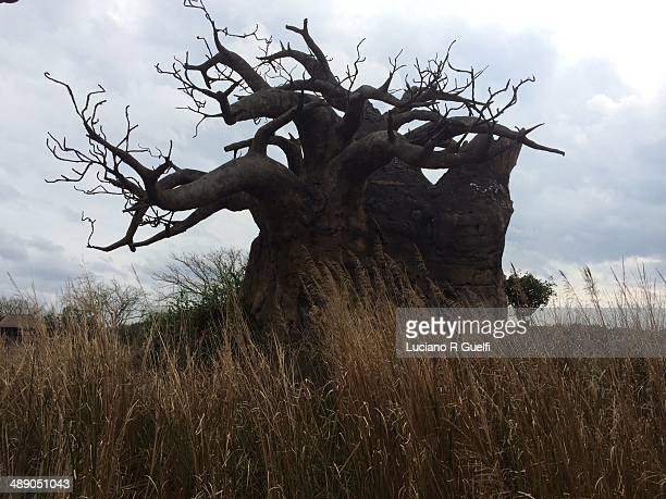 arbor day - disney's_animal_kingdom stock pictures, royalty-free photos & images