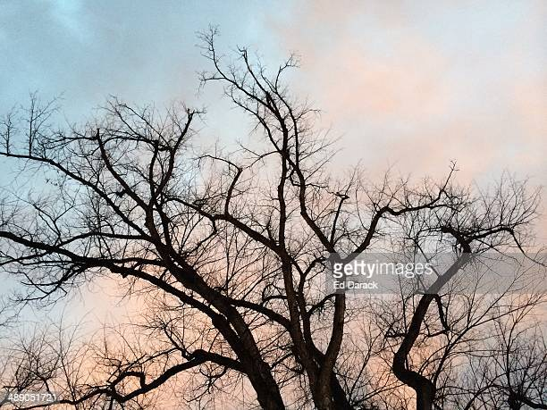 arbor day - dendrite stock photos and pictures