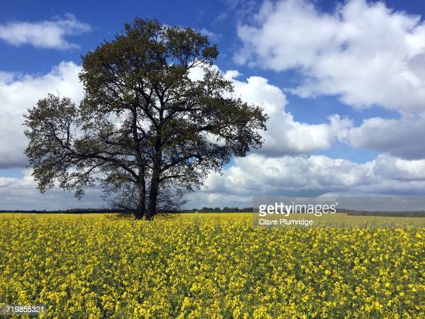 arbor day - claire plumridge stock pictures, royalty-free photos & images
