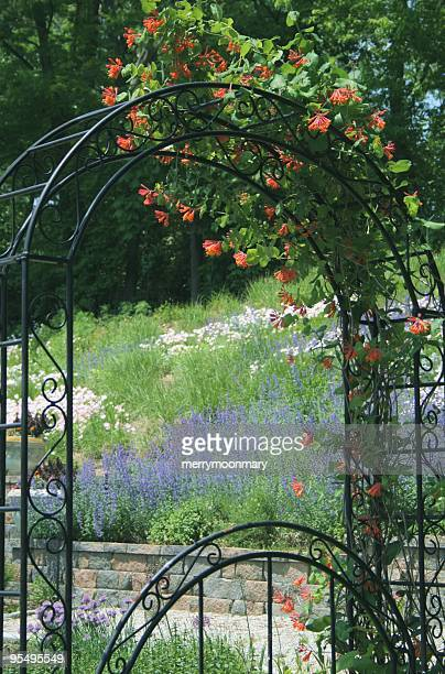 arbor with flowers - honeysuckle stock pictures, royalty-free photos & images