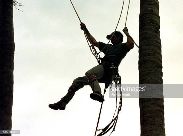 Arboreal man hanging on rope