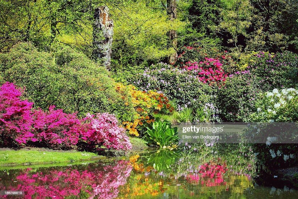 Arboretum In Springtime