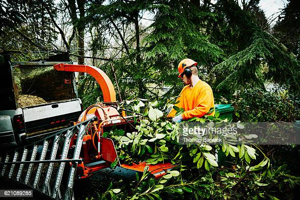 Arborist cleaning up after pruning project