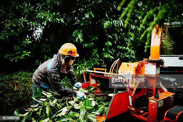 Arborist guiding branches into tree chipper