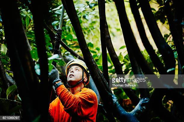 Arborist in tree using pole saw to prune branches