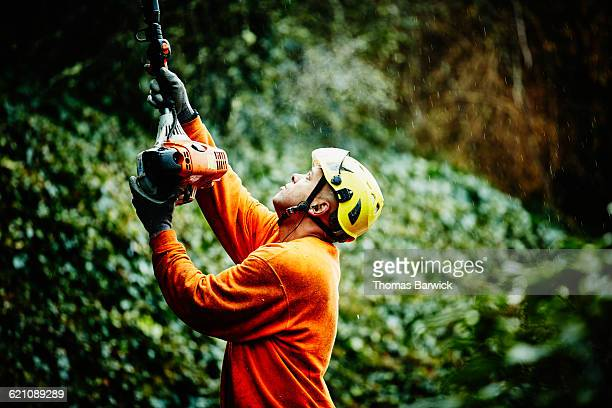 Arborist using pole saw during pruning project