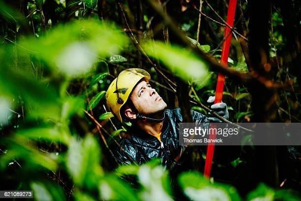 Arborist using pole saw to trim tree limbs in rain
