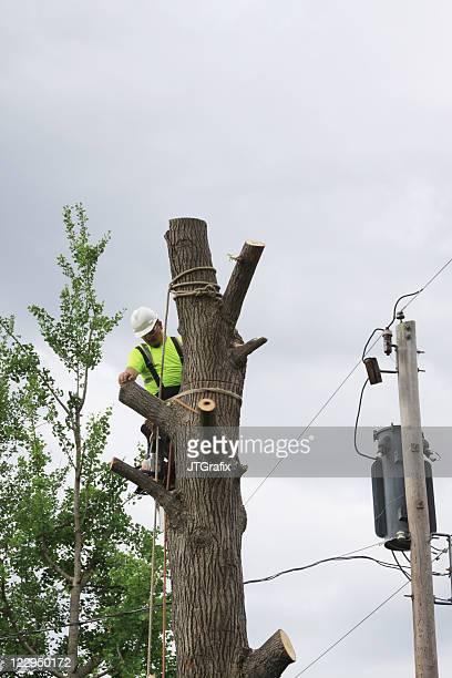 Arborist/Tree Service Worker