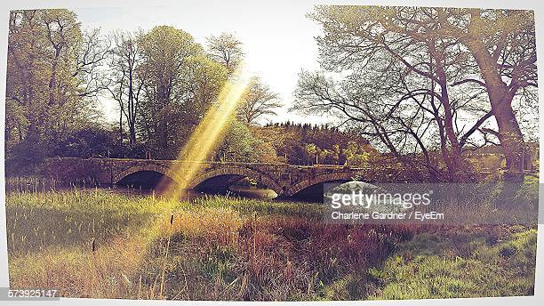 arch bridge over pitfour lake in forest - transferbild stock-fotos und bilder