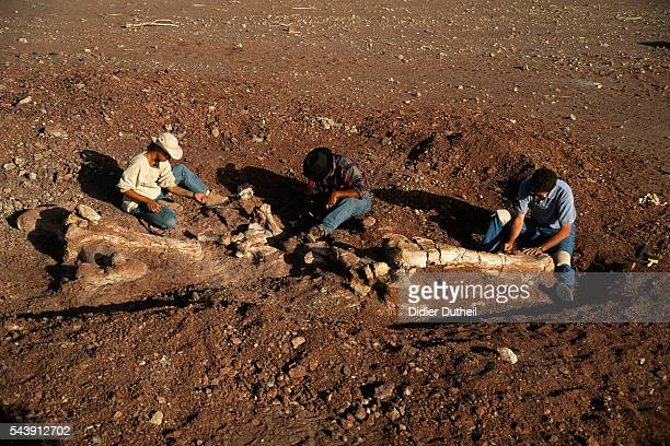 Archaeological dig in Niger