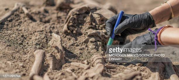archaeologist excavating skeleton - prehistoric man stock pictures, royalty-free photos & images