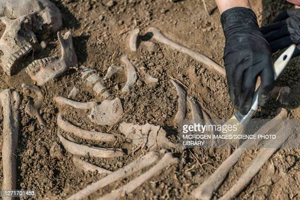 archaeologist excavating skeleton - archaeology stock pictures, royalty-free photos & images