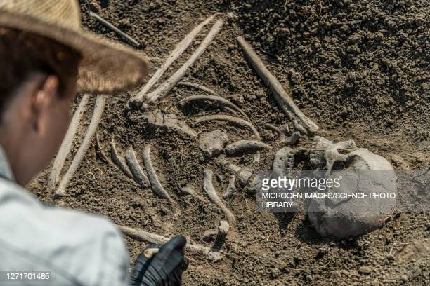 archaeologist excavating skeleton - ancient stock pictures, royalty-free photos & images