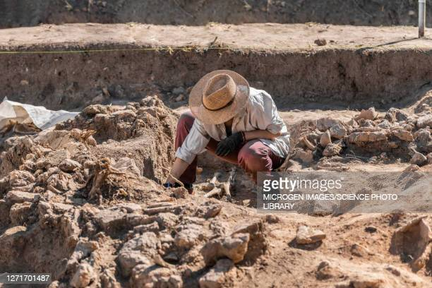 archaeologist excavating skeleton - ancient civilisation stock pictures, royalty-free photos & images