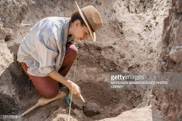 archaeologist uncovering artefacts - archaeology stock pictures, royalty-free photos & images