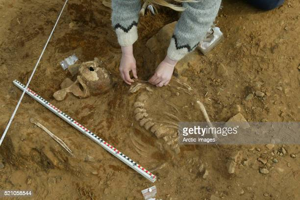 archaeologist uncovering whale bones - archaeology stock pictures, royalty-free photos & images