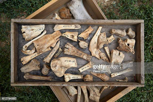 BELGOROD DNESTROVSKY UKRAINE AUGUST 12 Archaeologists and volunteers search the groung outside the Akkerman Fortress as animals bones were marked for...