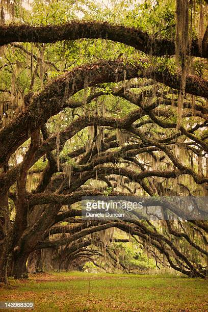Arched branches