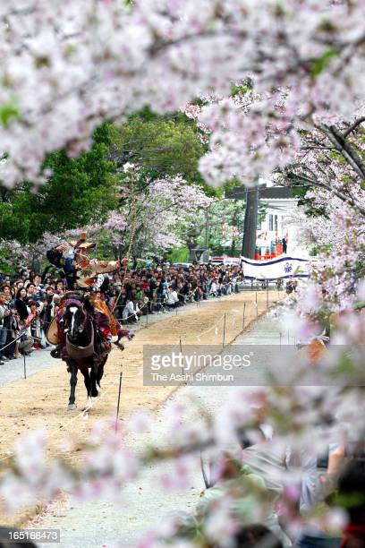 Archer on the running horseback aims at a target under fullybloomed cherry blossoms during a cherry blossom festival at Mihashira Shrine on March 31...