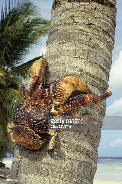 Archipelago of Seychelles, Aldabra, spring-summer archipel des Seychelles, Aldabra, printemps-?t?.