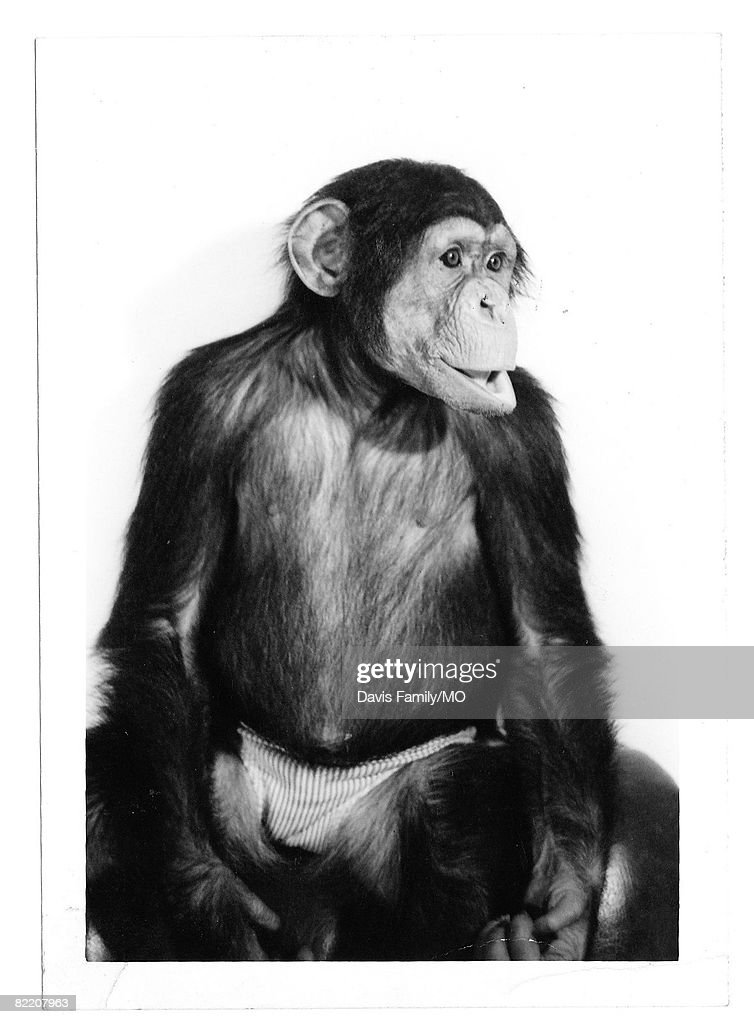 Family Photos From La Donna And St. James Davis And Moe, The Chimp : News Photo