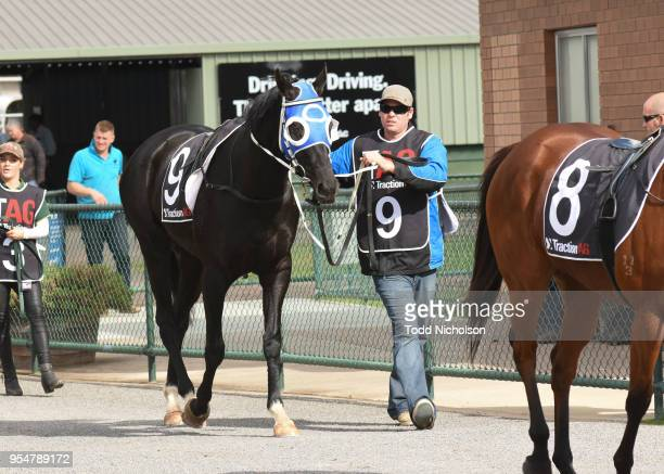 Archway to Heaven parades before the Save The Date Sun Oct 21st 0 58 Handicap at Horsham Racecourse on May 05 2018 in Horsham Australia