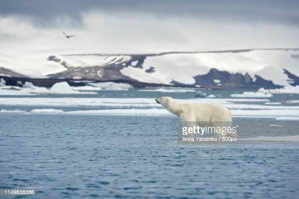 arctic edge - spitsbergen stock pictures, royalty-free photos & images