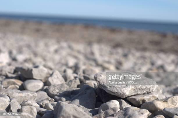 Arctic Fossil