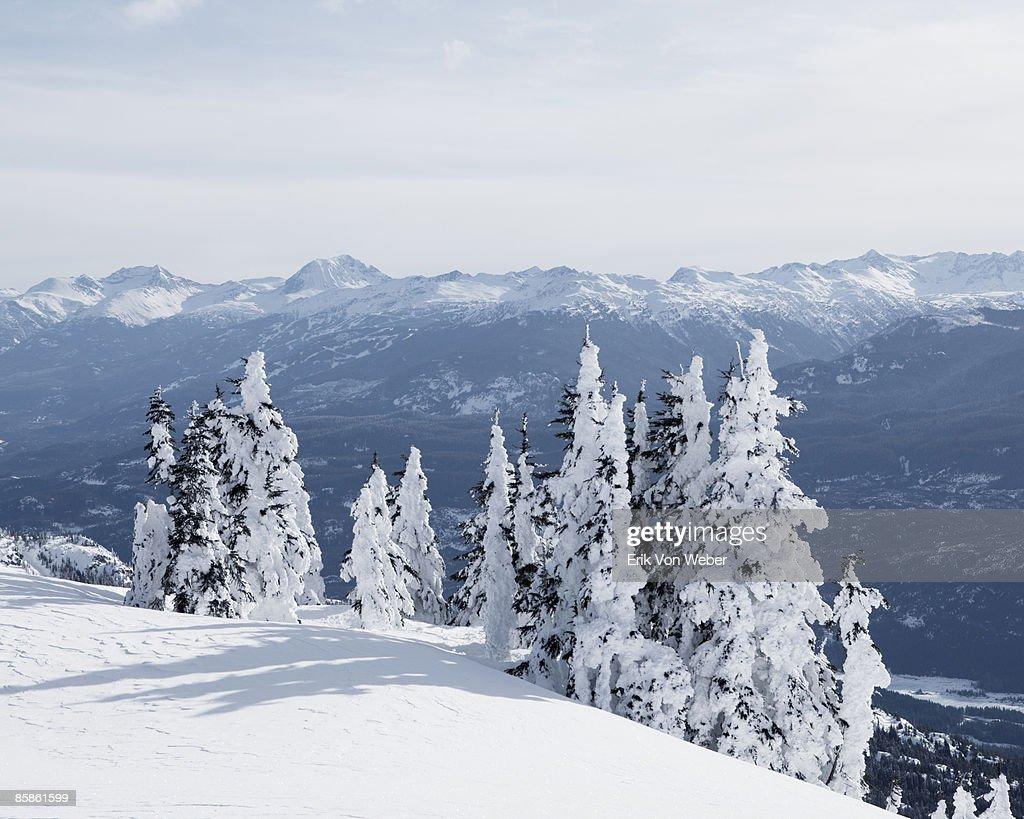 Arctic Landscapes : Stock-Foto
