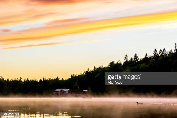 Arctic loon on the lake during sunset