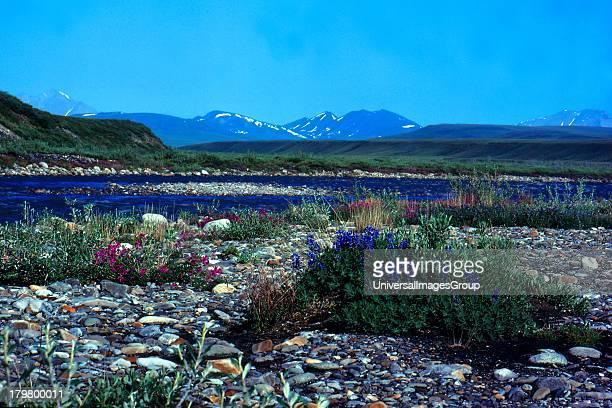 ANWR Arctic National Wildlife Refuge Alaska