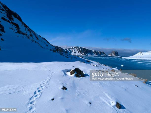 arctic scenery with mountains and coastline, spitsbergen, svalbard and jan mayen, norway - bear tracks stock pictures, royalty-free photos & images