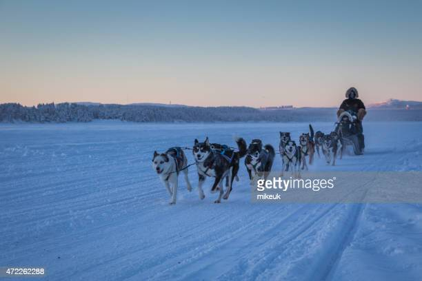 arctic winter dog sledge ride in the snow - sleigh stock photos and pictures