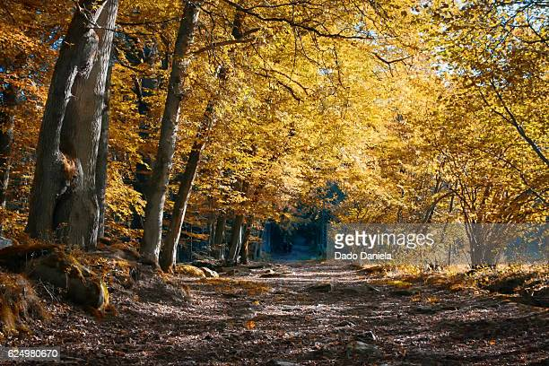 ardennes forest - ardennes department france stock photos and pictures
