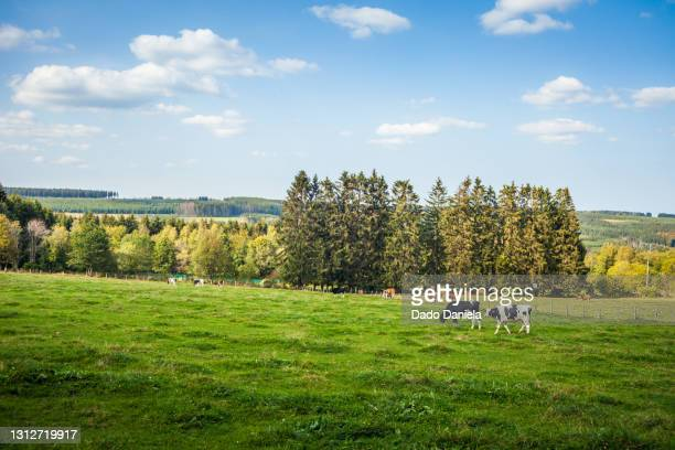 ardennes green countryside - capital region stock pictures, royalty-free photos & images