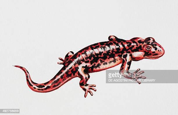Ardeosaurus sp Ardeosauridae Late Jurassic Illustration