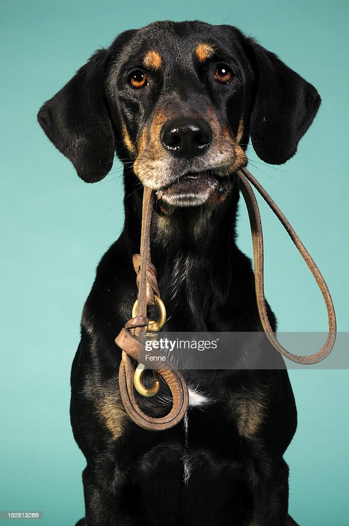 are we going for a walk? : Stock Photo