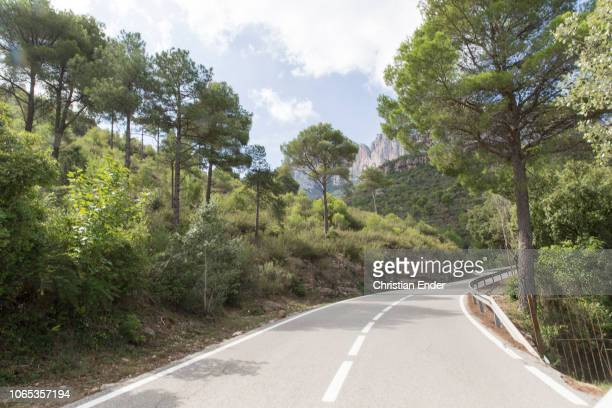 Area of Montserrat over a curvy road The trees growing on the hillside and are moving slowly in the wind