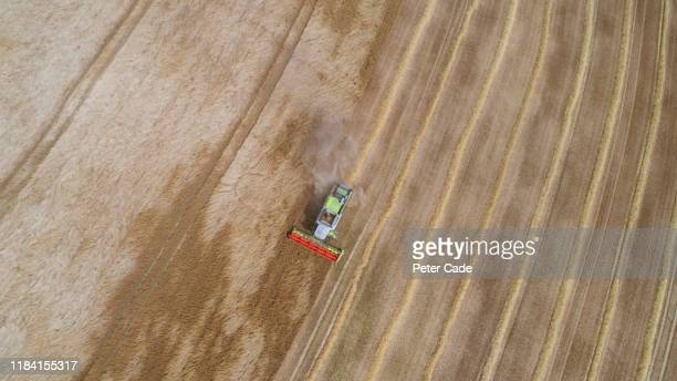 areal view of combine harvester in field - image stock pictures, royalty-free photos & images