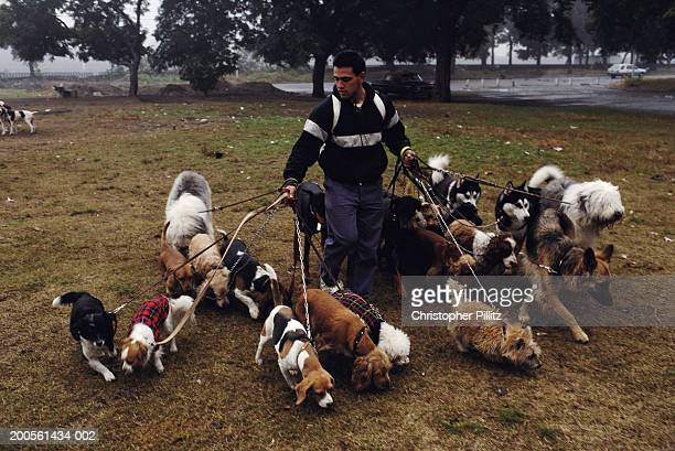 Argentina, Buenos Aires, Dog handler walking dogs in park