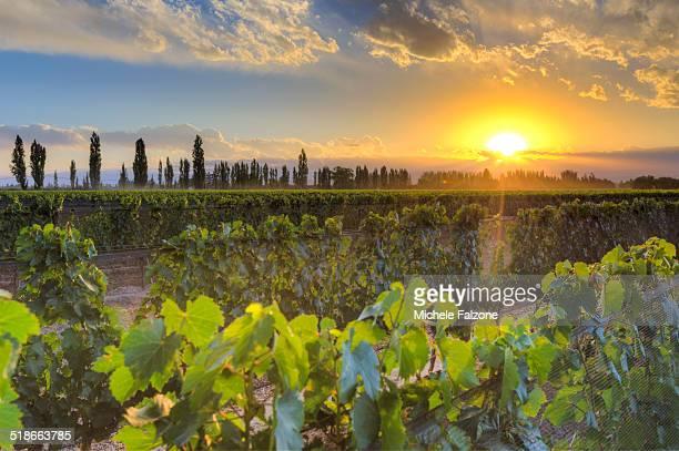 Argentina, Mendoza, Lujan de Cuyo wine region