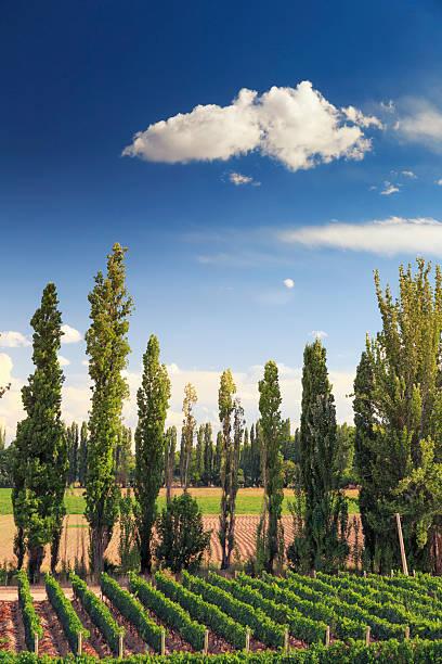 Argentina, Mendoza, Wineries Wall Art