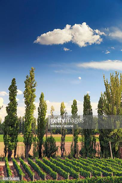Argentina, Mendoza, Wineries