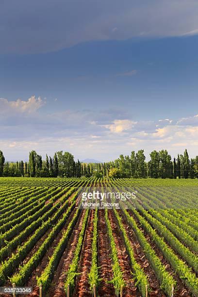 Argentina, Mendoza, Wineries