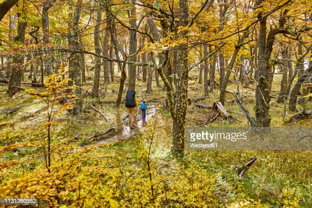 argentina, patagonia, el chalten, mother and son hiking in autumnal forest - chalten stock pictures, royalty-free photos & images