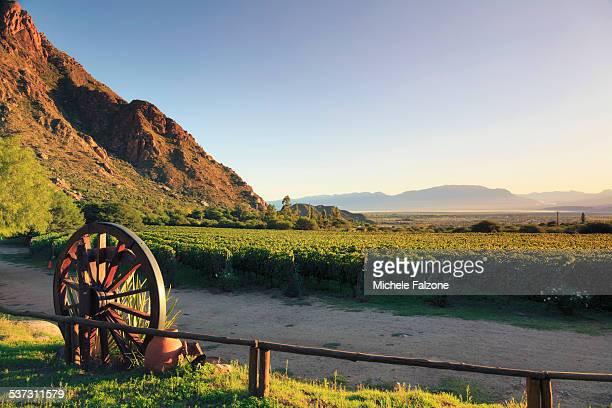 Argentina, Salta, Torrontes Grape Wineries